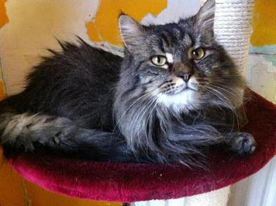 URGENCE euthanasie pour 4 chats ( 62 )-001.jpg