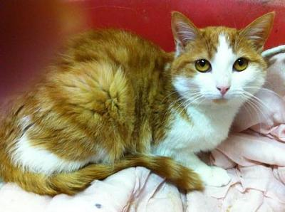 URGENCE euthanasie pour 4 chats ( 62 )-003.jpg