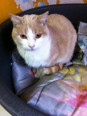 URGENCE euthanasie pour 4 chats ( 62 )-004.jpg