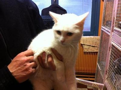 URGENCE euthanasie pour 4 chats ( 62 )-005.jpg