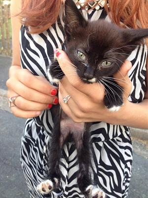 Urgence pour deux chatons-13833462_1159706700758122_316045246_o.jpg