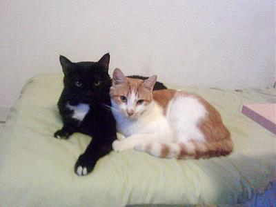 URGENT A PLACER 2 CHATS MALES CASTRES-140113114721412655.jpg