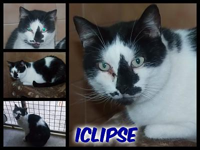 URGENT-- REFUGE SATURE--70 CHATS--(Bethune) - post 13-13 -- eutha le 31/12/13-iclipse.jpg