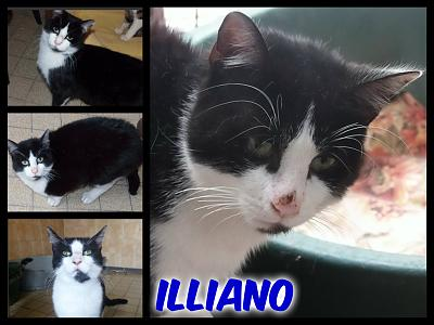 URGENT-- REFUGE SATURE--70 CHATS--(Bethune) - post 13-13 -- eutha le 31/12/13-illiano.jpg