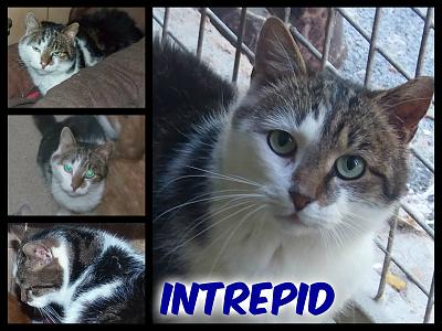 URGENT-- REFUGE SATURE--70 CHATS--(Bethune) - post 13-13 -- eutha le 31/12/13-intrepid.jpg