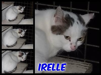 URGENT-- REFUGE SATURE--70 CHATS--(Bethune) - post 13-13 -- eutha le 31/12/13-irelle.jpg