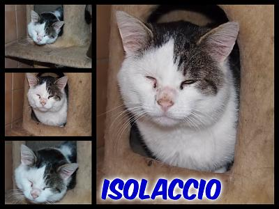 URGENT-- REFUGE SATURE--70 CHATS--(Bethune) - post 13-13 -- eutha le 31/12/13-isolaccio.jpg