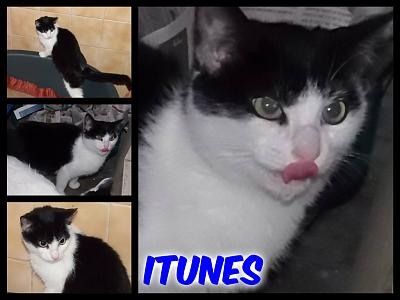 URGENT-- REFUGE SATURE--70 CHATS--(Bethune) - post 13-13 -- eutha le 31/12/13-itunes.jpg
