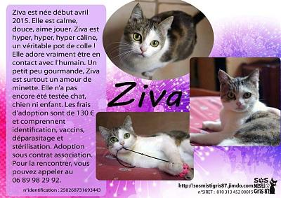Ziva, à l'adoption !-image.jpeg