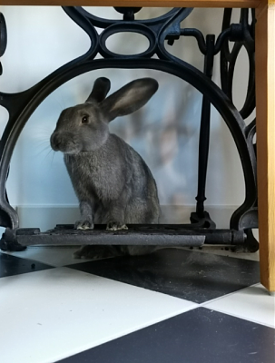 [Bientôt à l'adoption] Roswell, association Happy Bunny-roswell-29.png