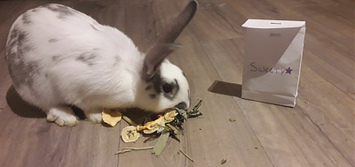 [A l'adoption] Ambrose, association Happy Bunny-sweety-4.png