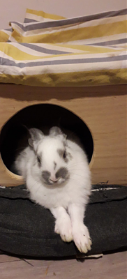 [A l'adoption] Ambrose, association Happy Bunny-sweety-6.png