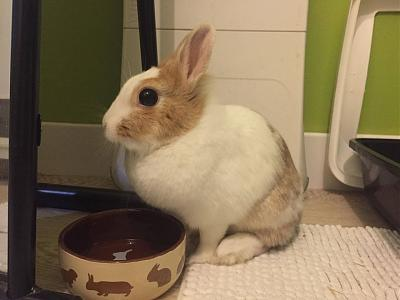 [A l'adoption] Cannelle, lapine stérilisée, association Happy Bunny-68804915_531958570876994_8237535085163708416_n.jpg