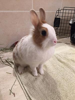 [A l'adoption] Cannelle, lapine stérilisée, association Happy Bunny-69148599_531958654210319_6920652022916055040_n.jpg