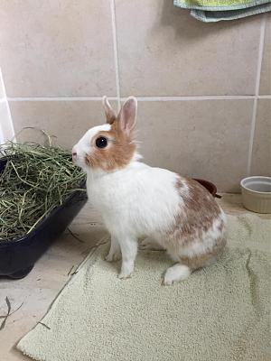 [A l'adoption] Cannelle, lapine stérilisée, association Happy Bunny-69292818_531958534210331_3291701444331175936_n.jpg