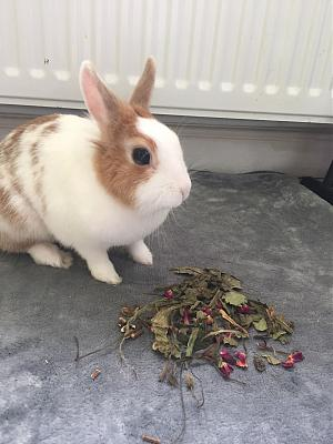 [A l'adoption] Cannelle, lapine stérilisée, association Happy Bunny-69785789_363638247846265_8074201735209418752_n.jpg