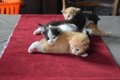4-mignons-petits-chatons-adopter-dsc_0048
