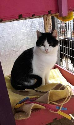 BUFFY (F), noir et blanc, douce et caline, 2,5 ans (35)-buffy.jpg