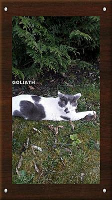 GOLIATH à l'adoption-goliath1.jpg