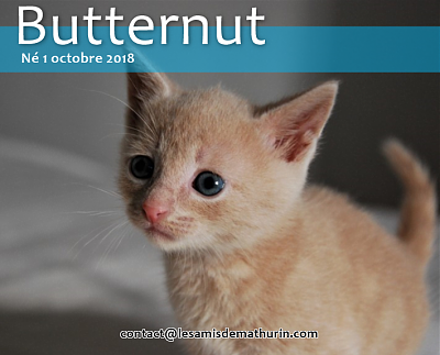 **A l'adoption BUTTERNUT de Puiseaux**-butternut-01.png