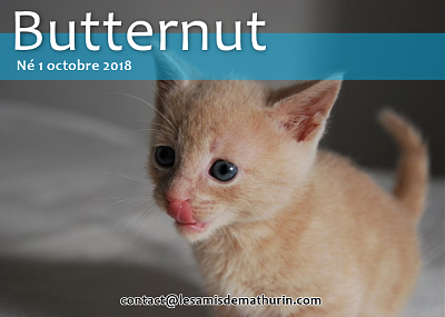**A l'adoption BUTTERNUT de Puiseaux**-butternut-02.png