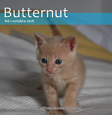 **A l'adoption BUTTERNUT de Puiseaux**-butternut-03.png