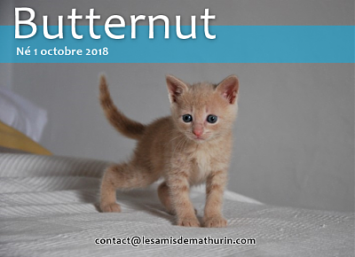 **A l'adoption BUTTERNUT de Puiseaux**-butternut-04.png