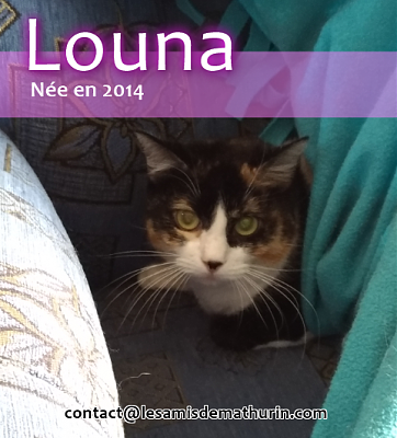 **A l'adoption ou FA pour LOUNA**-louna-01.png