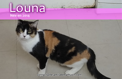 **A l'adoption ou FA pour LOUNA**-louna-04.png