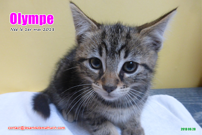 ***A L'ADOPTION - OLYMPE (2 mois)-olympe-01.png