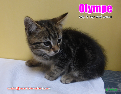 ***A L'ADOPTION - OLYMPE (2 mois)-olympe-02.png