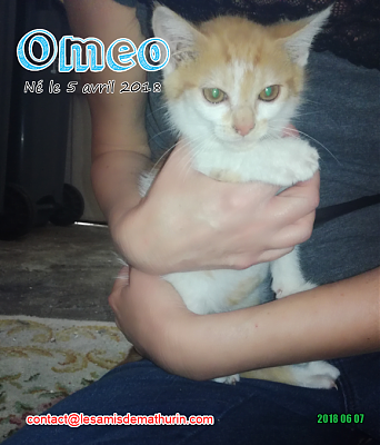 **A l'adoption - OMEO (2 mois)**-omeo-01.png