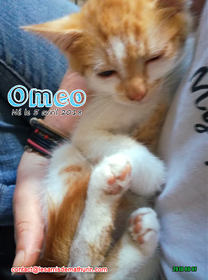 **A l'adoption - OMEO (2 mois)**-omeo-03.png