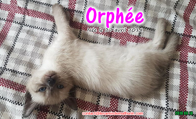 **A l'adoption - ORPHEE (2 mois)**-orphee-01.png