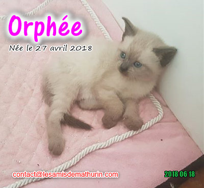 **A l'adoption - ORPHEE (2 mois)**-orphee-02.png
