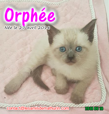 **A l'adoption - ORPHEE (2 mois)**-orphee-03.png