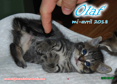 **A l'adoption - Prunelle et ses 6 chatons**-olaf-01.png
