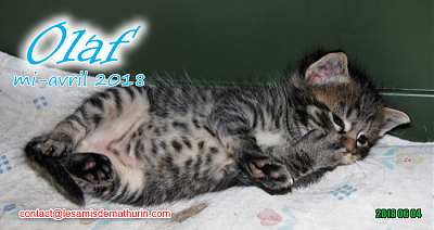 **A l'adoption - Prunelle et ses 6 chatons**-olaf-03.png