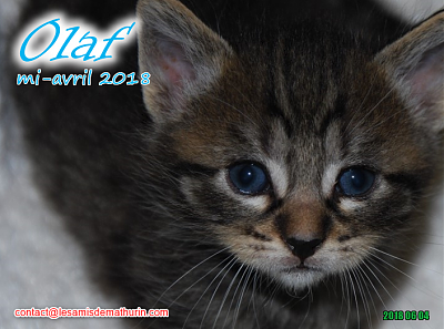 **A l'adoption - Prunelle et ses 6 chatons**-olaf-04.png