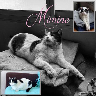 Mimine - adorable chatte - adoption (38)-mimine.jpg