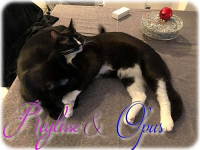 Opus & Reglisse - adoption 38-reglisse-and-opus-id-4.jpg