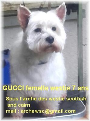 a adopter Gucci femelle wetie 7 ans-guccip10.jpg