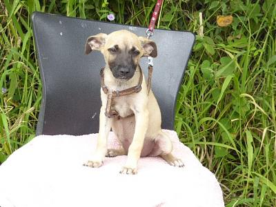 A ADOPTER PINKY CHIOT FEMELLE 3 MOIS 2,3KG-pinky2.jpg