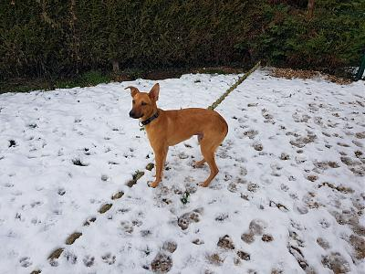Adorable chiot à l'adoption-20190130_131450.jpg