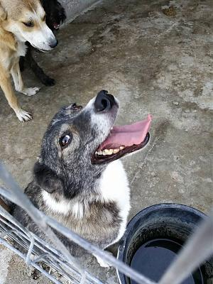 CANDY - CHIENNE CROISEE DE 4 ANS - TRES CALINE - REFUGE ALINA-21761452_1999580530279381_3671304870125877738_n.jpg