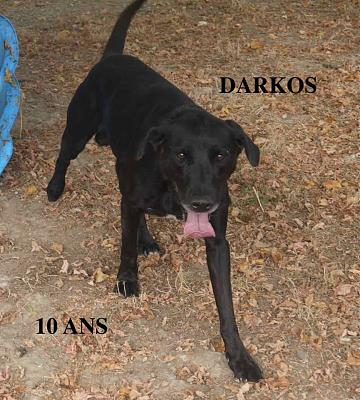 DARKOS - Type berger -10 ANS -  SPA MONTAUBAN (82)-43263180_1086757794838387_939252482268200960_n.jpg