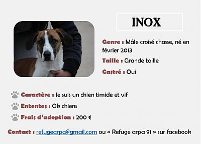 INOX  -  croisé chasse 6 ans (6 ans de refuge)  -  ARPA A  RIS  ORANGIS  (91) Inox-male-croise-chasse-grande-taille-2013-arpa-91-12465861_10208478915078875_5423613845190861126_o-1-