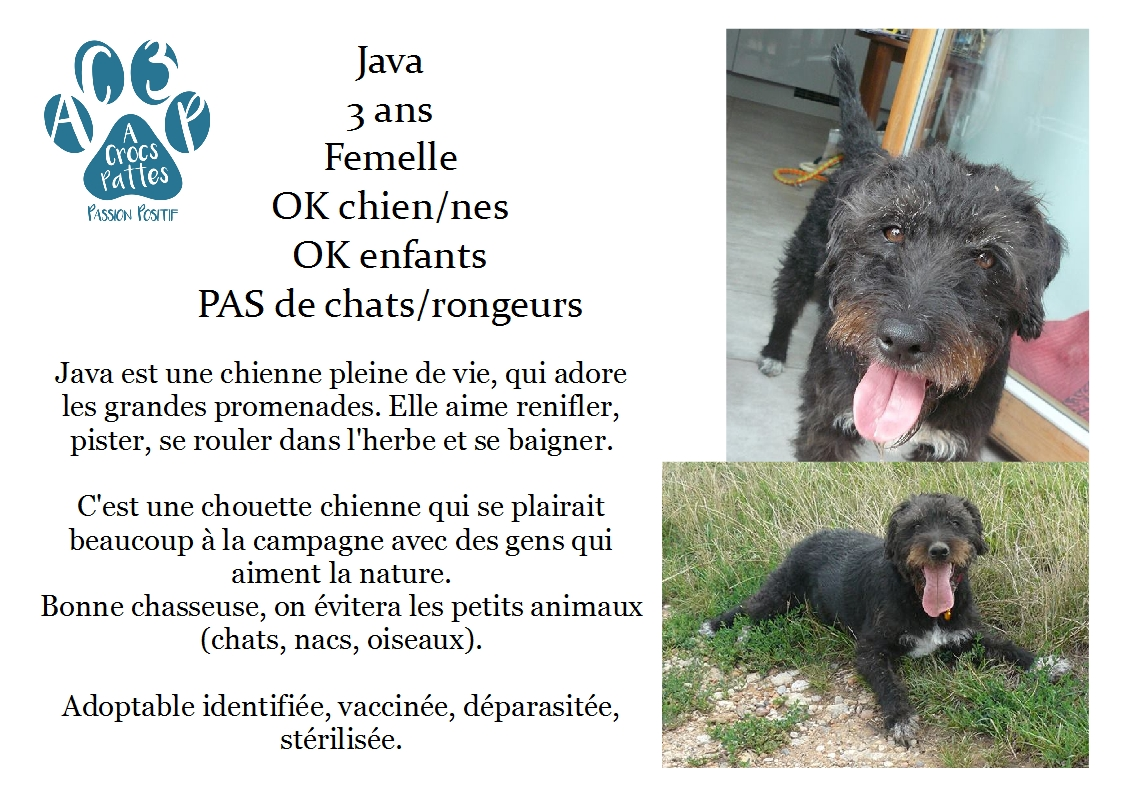 Adoption Chien - Annonce : /!\\ Java Drahthaar x Fox 3 ans (68)