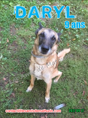 **A L'ADOPTION - DARYL (9 ans)**-daryl-01.png