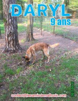 **A L'ADOPTION - DARYL (9 ans)**-daryl-02.png
